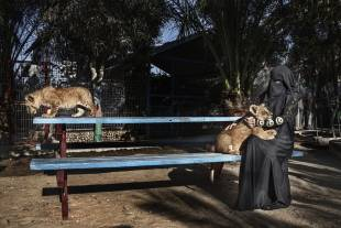 visita allo zoo di rafah