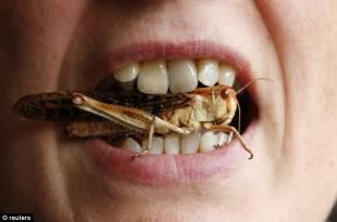 insetti da mangiare 2