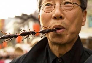 insetti da mangiare 3