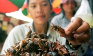 insetti da mangiare 5