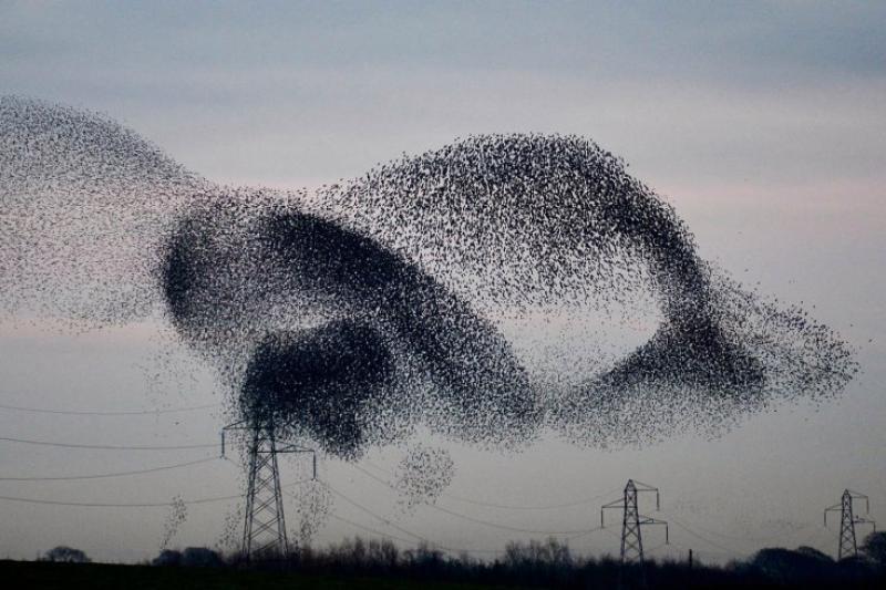 Stormo di uccelli su vercelli trailer del film - 3 part 10