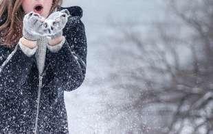 freddo 1