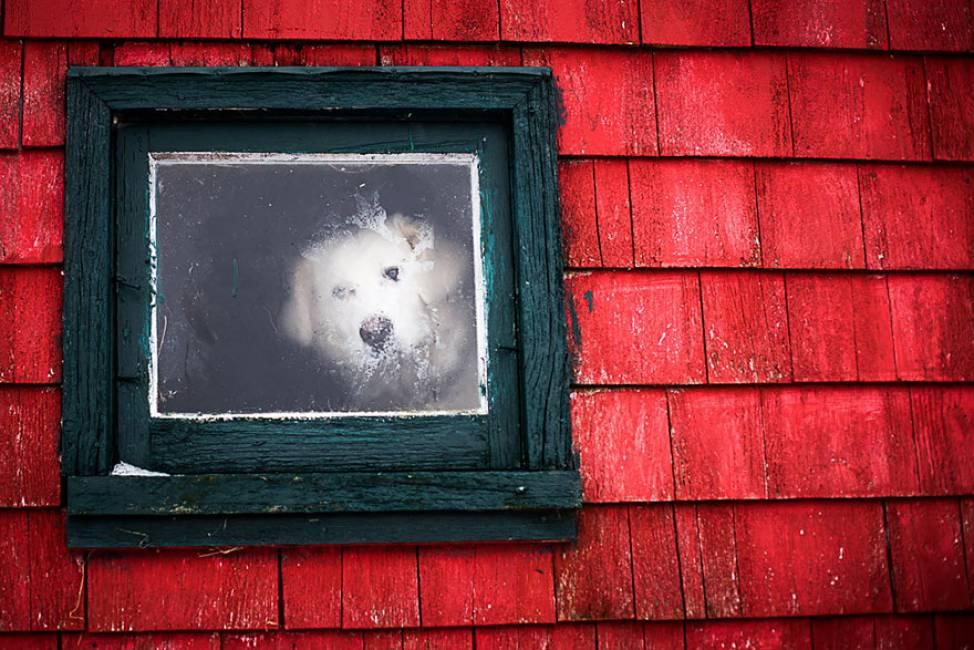Animali sfacciati alla finestra siamo noi a spiare loro o sono loro a spiarci 15 curiose - Spiare dalla finestra ...