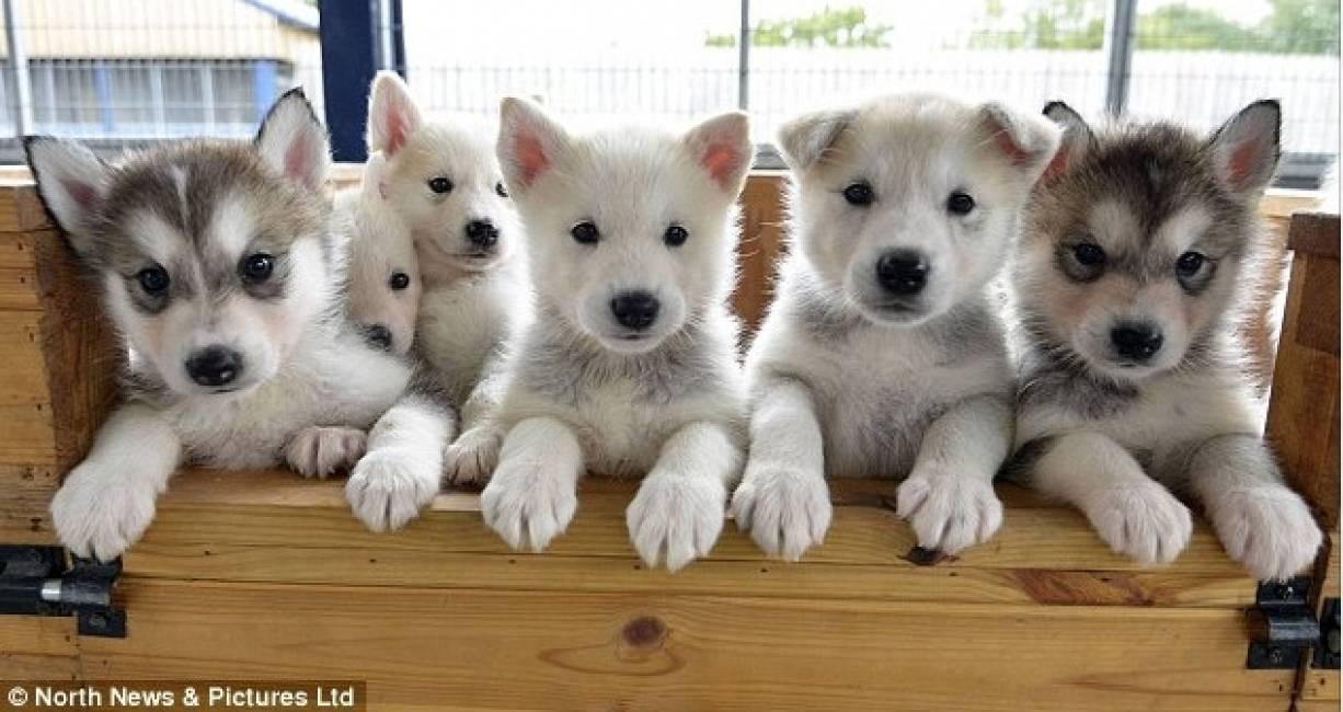 Game Puppy Dog Eye